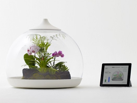 Biome Smart terrarium design