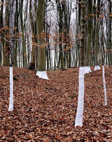 Zander Olsen Treeline