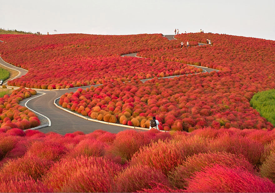 Hitachi Seaside Park, Japan - Bild: sename777
