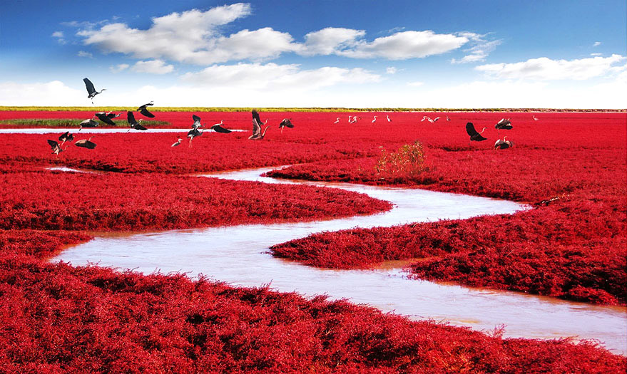 Red Beach, Panjin, China - Bild: MJia