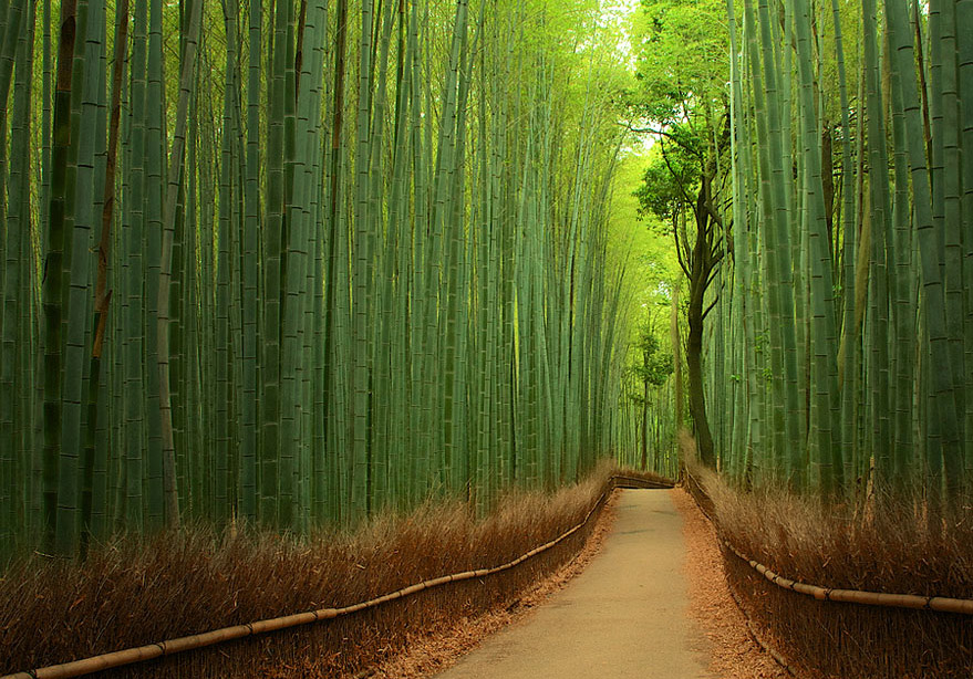Bamboo Forest, Japan - Bild: Tomoaki Kabe
