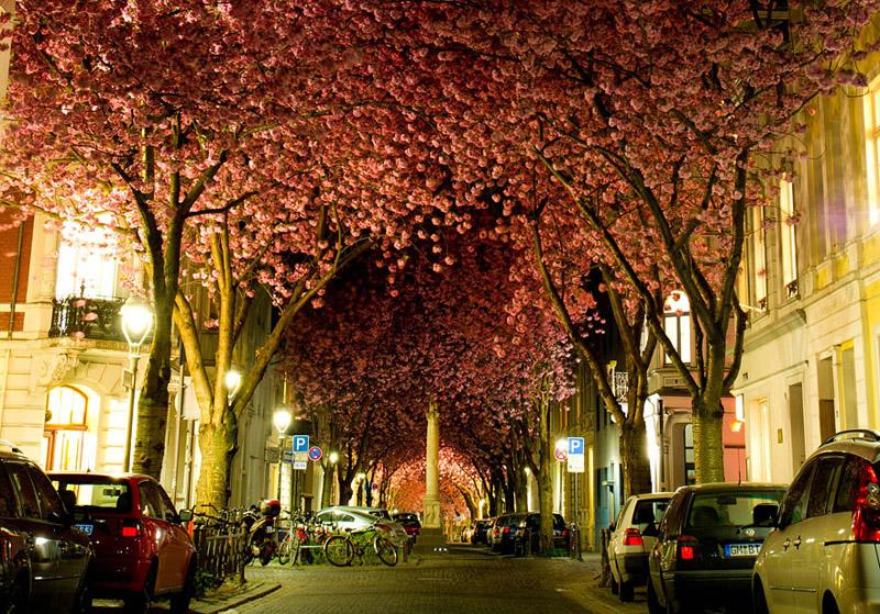 Straße in Bonn - Bild: Adas Meliauskas