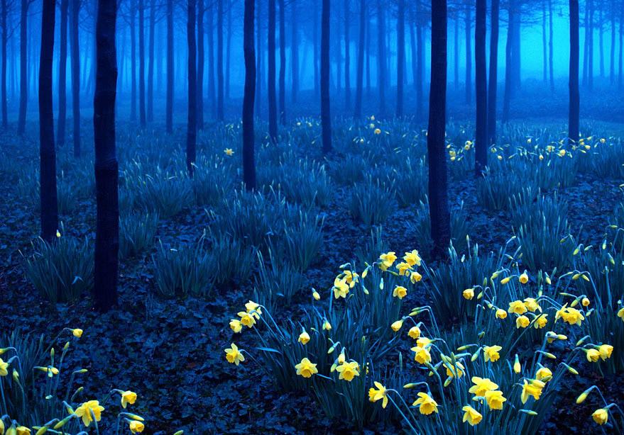 Schwarzwald, Deutschland - Bild: Andy Linden