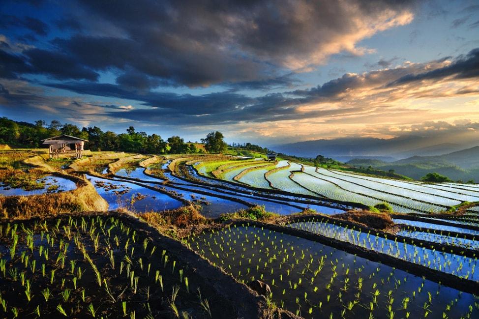 baby-rice-field_01