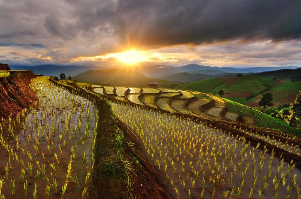 baby-rice-field_03