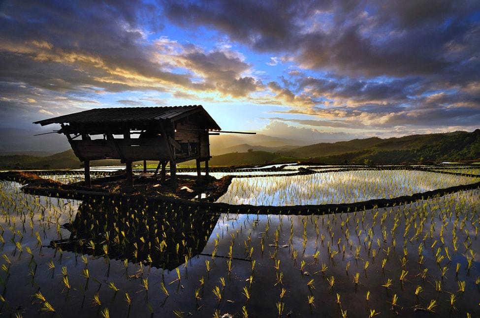 baby-rice-field_08