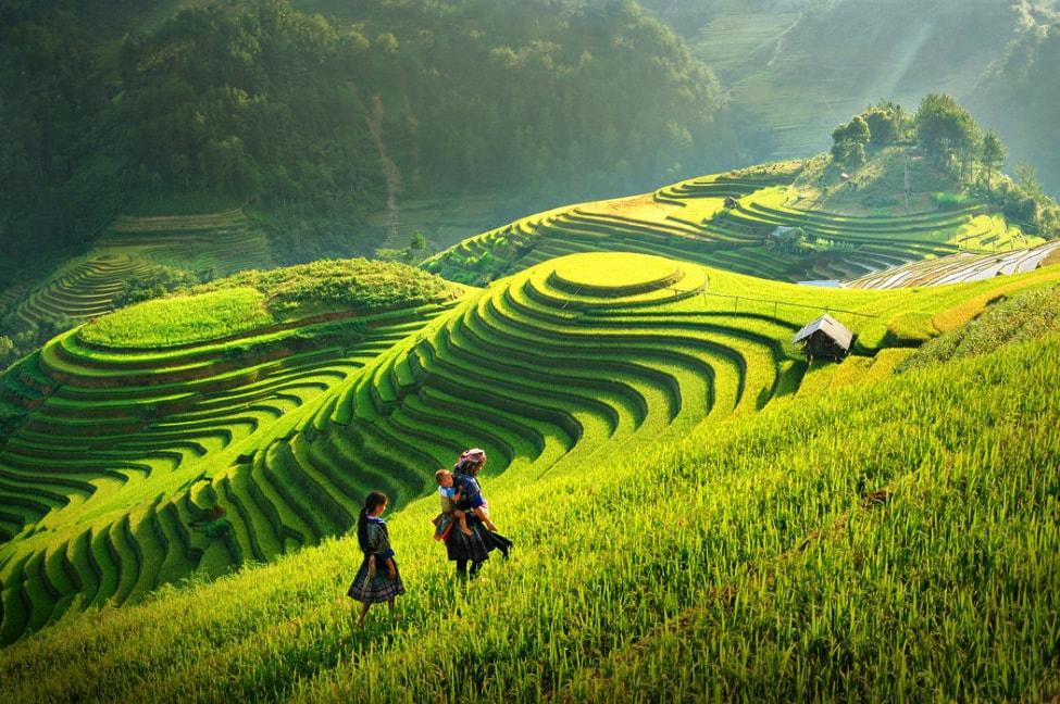 baby-rice-field_10