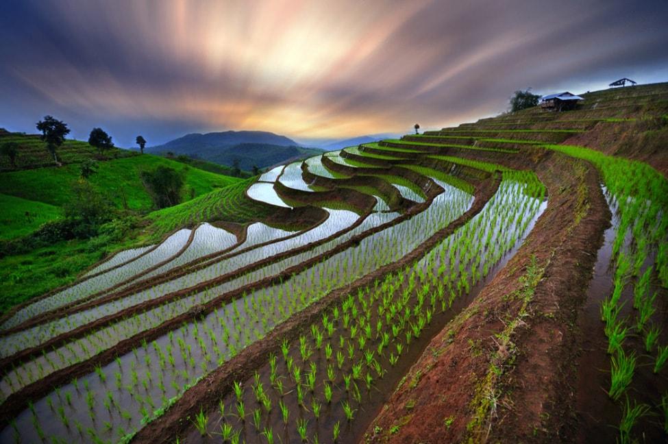 baby-rice-field_12