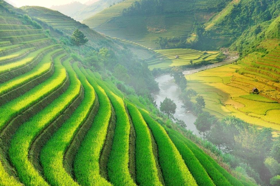 baby-rice-field_13