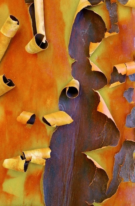 Cedric Pollet - Bark. Coffeebreak - der Design-Blog