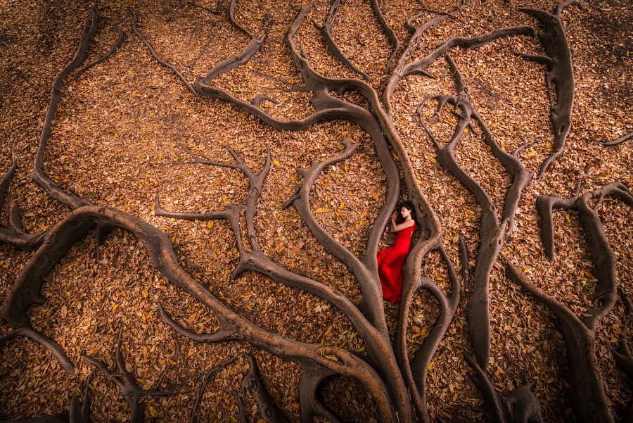 Roots Birth by Julien Orre