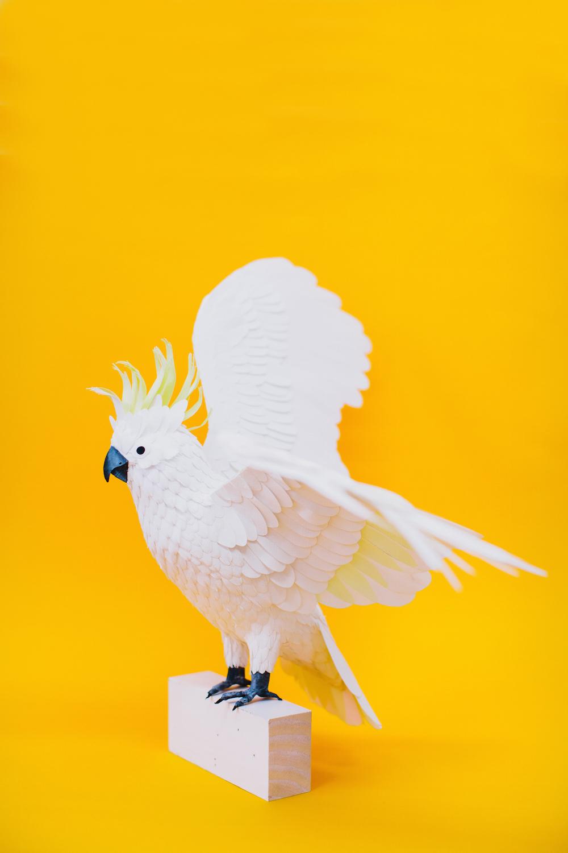 Diana Beltran Herrera Paper Bird Sculptures