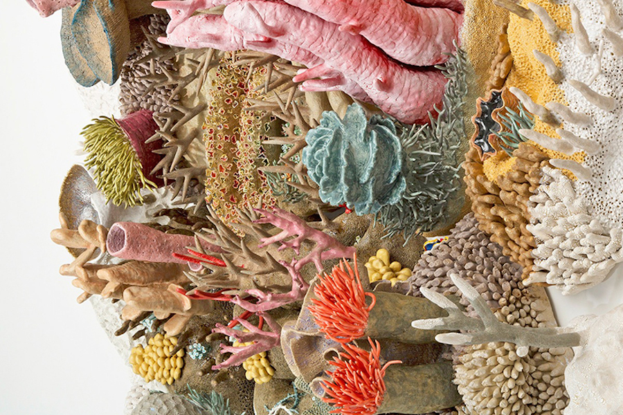 Courtney Mattison Coral Reefs