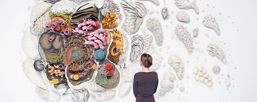 Courtney Mattison Coral Reefs