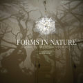 Forms In Nature Kronleuchter von Hilden & Diaz