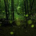 Yume Cyan Glühwürmchen Fotografien