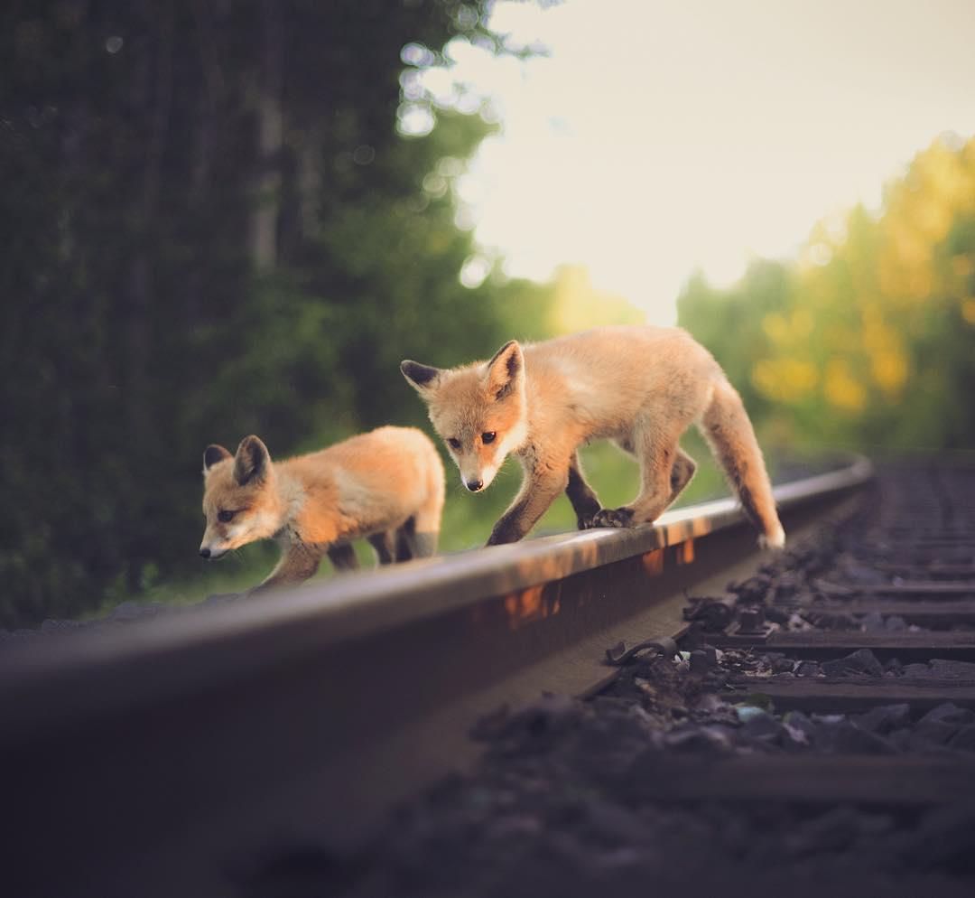Konsta Punkka Wildtier Fotografie