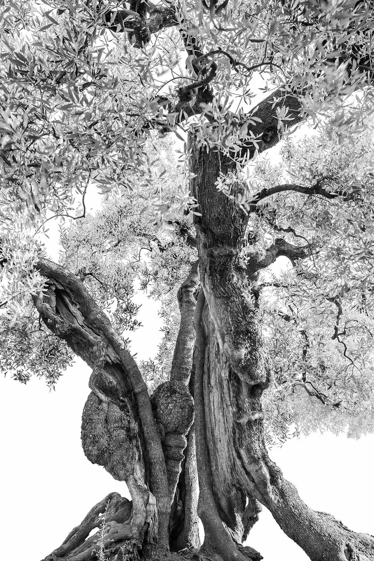 Martin Ogolter - Monumentali - Natural Design