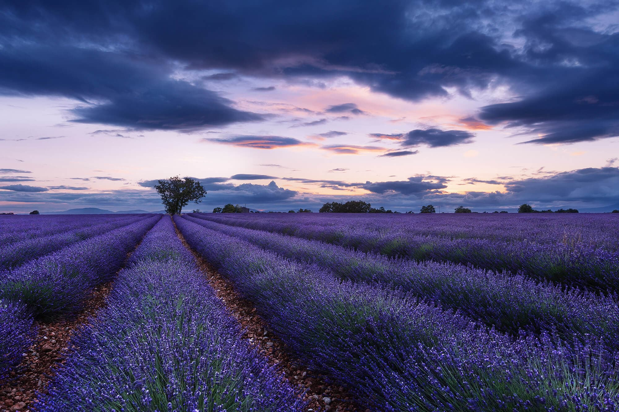 Aurélien Billois Lavendelfelder Fotografie Design
