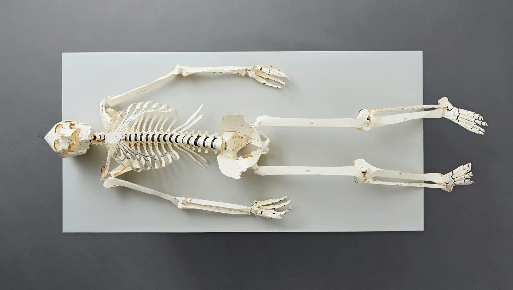 TASCHEN - Menschliches Skelett aus Pappe
