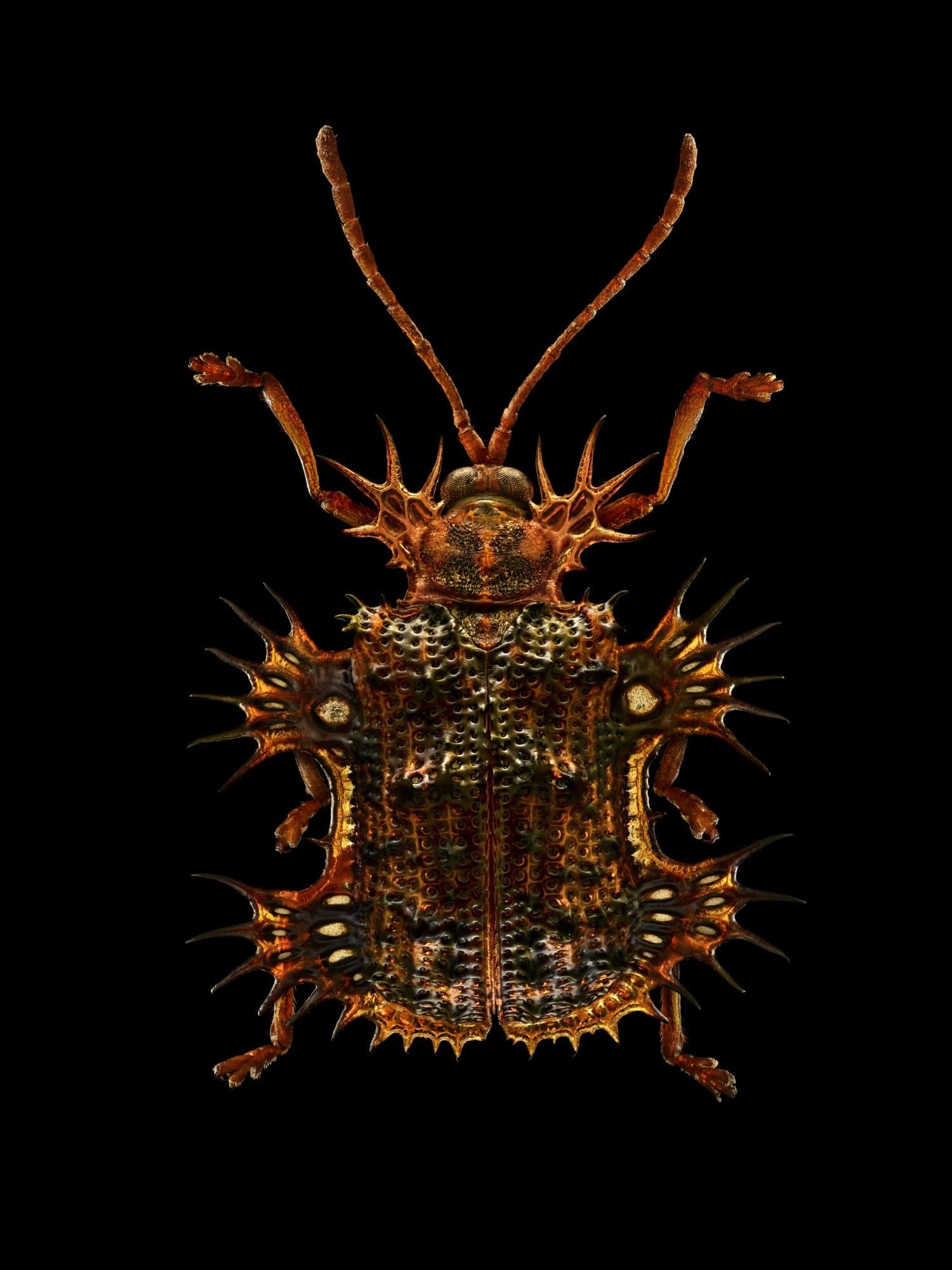Levon Biss Microsculptures
