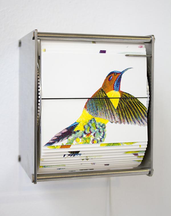 Juan Fontanive - Ornithology - Bewegte Bilder Design