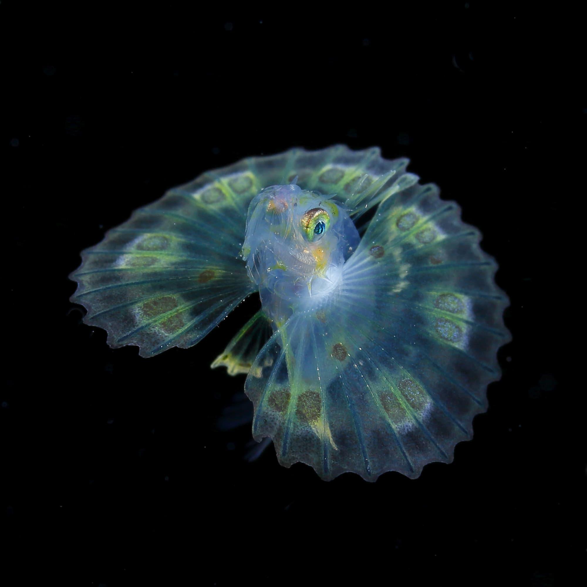 Ryo Minemizu - Phenomenons - Unterwasserfotografie