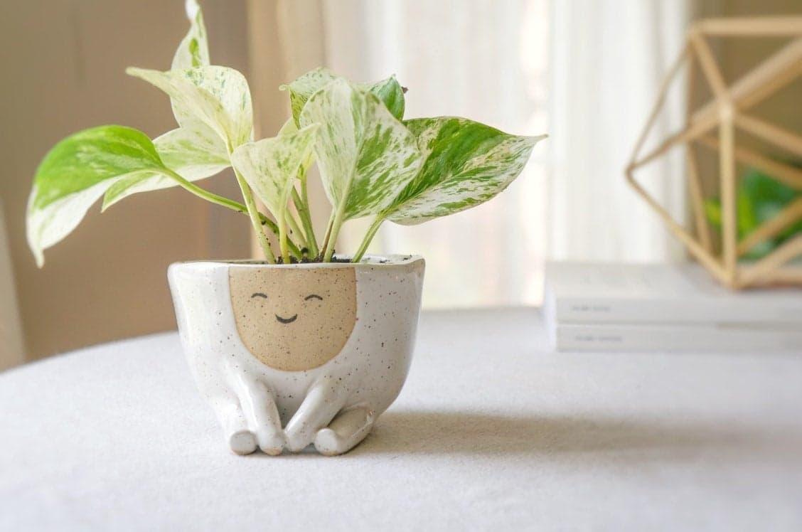 Abby Ozaltug Lächelnde Pflanztöpfe