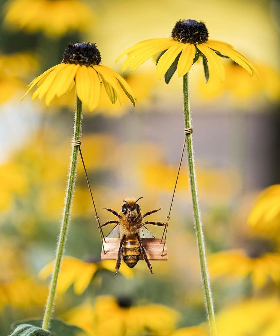 Bee Influencer - Fondation de France
