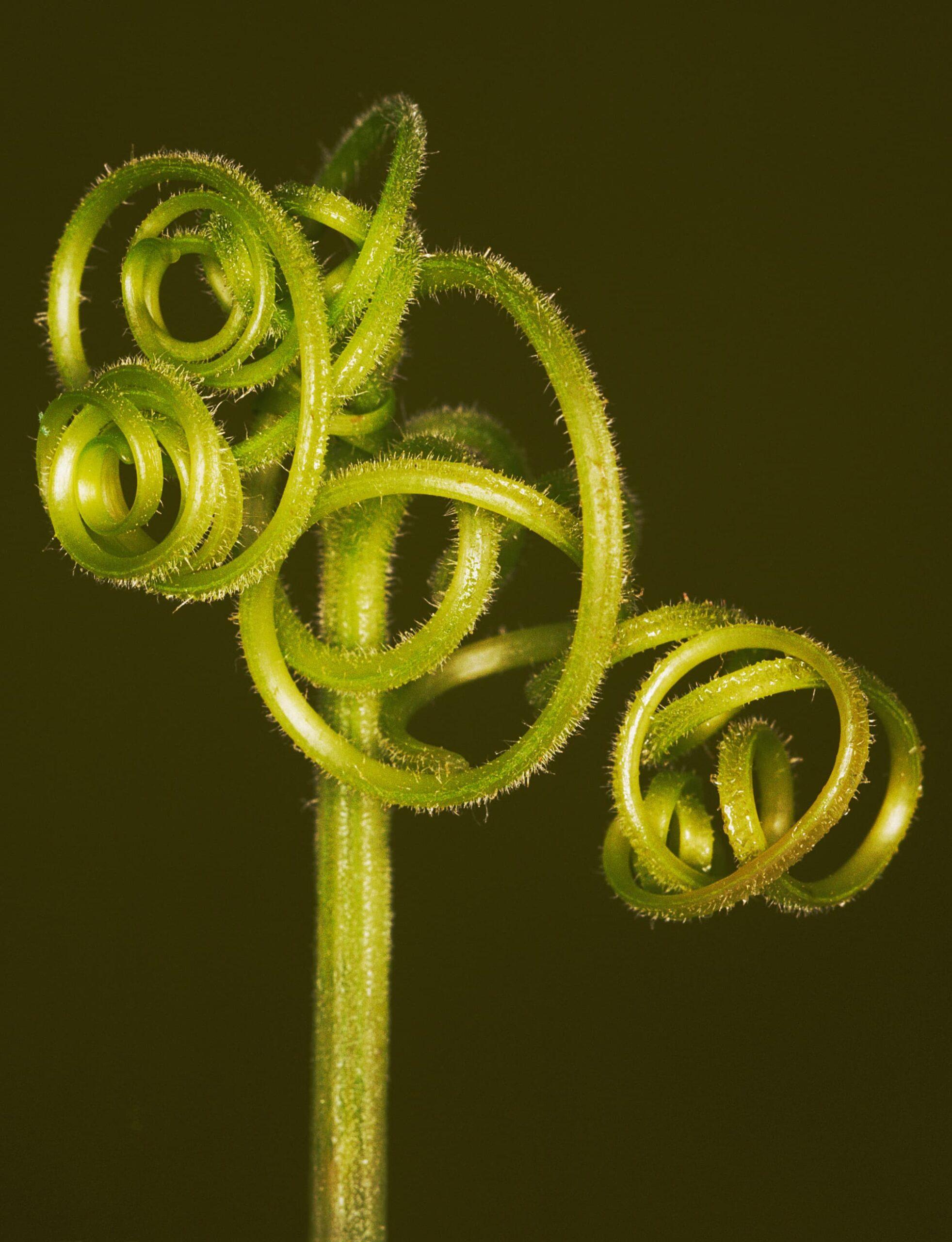 Helene Schmitz Makrofotos ungewöhnlicher Pflanzen
