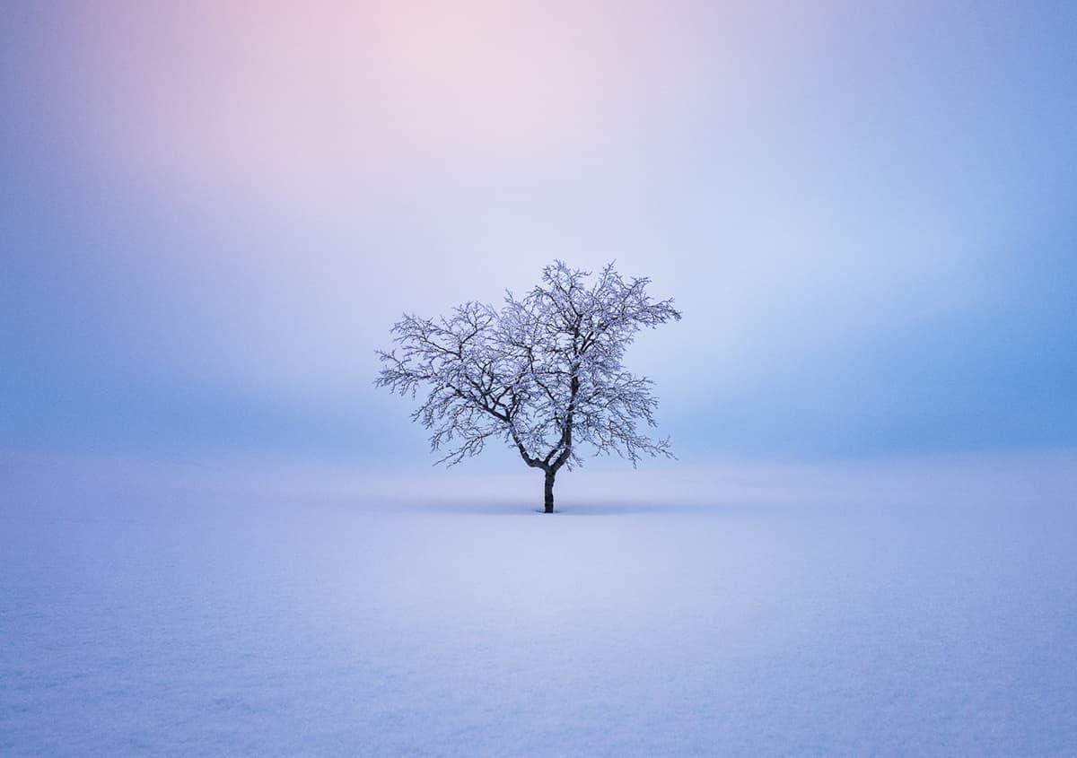Mikko Lagerstedt - Trees Bilderserie