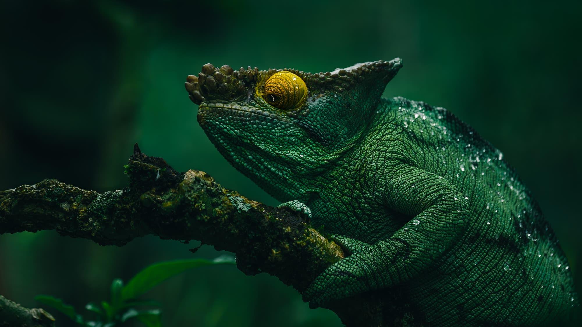 Ben Simon Rehn Fotografie - Amphibien in Madagaskar