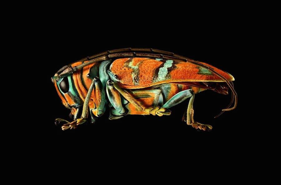 Levon Biss - Mikroskulpturen von Insekten