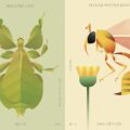 Hoang Hoang - Insect World Collection