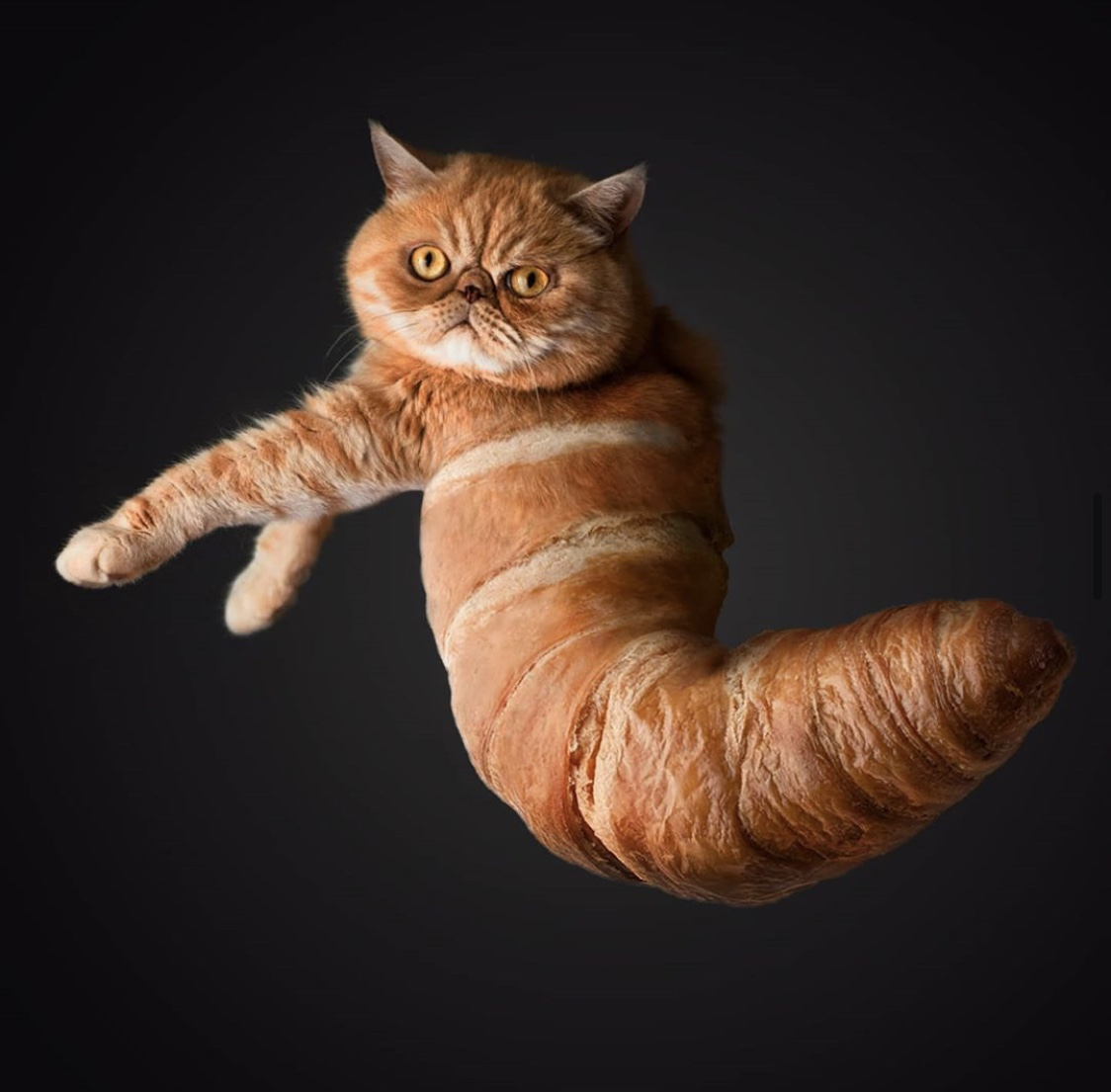 animalsinthings - Fotokollagen mit Tieren