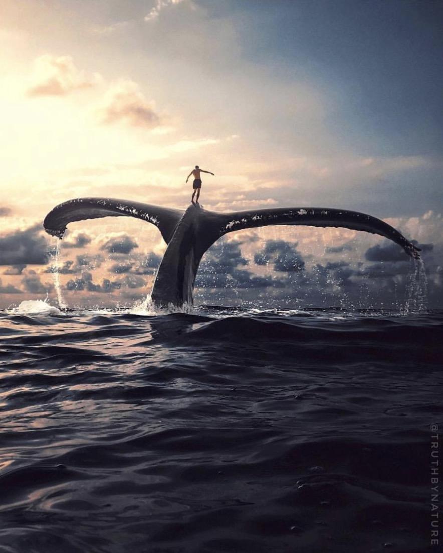 Truthbynature - Bildpompositionen von Jeff Cole
